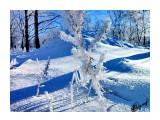 Деревья Фотограф: alexei1903  Просмотров: 1238 Комментариев: 0