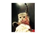Название: image Фотоальбом: Муся Категория: Животные  Просмотров: 488 Комментариев: 0