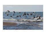На фоне моря. Фотограф: 7388PetVladVik  Просмотров: 1265 Комментариев: 0