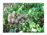 Название: Что за растение? Фотоальбом: Октябрьский 30-31 августа 2014 г. Категория: Природа Фотограф: Mitrofan  Просмотров: 1931 Комментариев: 5