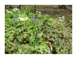 Весенний лесной лужок! Фотограф: viktorb Уюновские весенние лужки в окр. Южно-Сахалинска!  Просмотров: 1342 Комментариев: 0