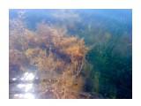 Название: Сады подводные Фотоальбом: 2010 07 10-11 сб,/ 2009 07 24 Мыс Мосия,мыс Тоннель, мыс Круглый Категория: Туризм, путешествия Фотограф: vikirin  Время съемки/редактирования: 2010:07:11 12:26:53 Фотокамера: Sony Ericsson - T700 Диафрагма: f/2.8 Выдержка: 1/200 Фокусное расстояние: 360/100 Светочуствительность: 64   Просмотров: 3206 Комментариев: 0