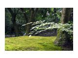 сады киото Фотограф: marka киото 2007  Просмотров: 664 Комментариев: 0