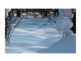 Синие тени - к весне.. Фотограф: vikirin  Просмотров: 2458 Комментариев: 0