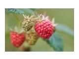 Цветочки-ягодки  разные...  DSC09611   Просмотров: 111  Комментариев: 0