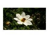 P1010079 Фотограф: к982  Просмотров: 1560 Комментариев: 0