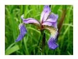 Название: P7020200_н Фотоальбом: Цветы, деревья и травы Категория: Цветы  Время съемки/редактирования: 2021:07:02 16:44:44 Фотокамера: OLYMPUS IMAGING CORP.   - FE250/X800              Диафрагма: f/2.8 Выдержка: 10/2000 Фокусное расстояние: 74/10    Просмотров: 132 Комментариев: 0