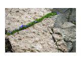 на влк Баранского Фотограф: © marka /печать больших фотографий,создание слайд-шоу на DVD/  Просмотров: 2215 Комментариев: 0