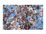 Название: * Фотоальбом: сакура Категория: Цветы  Время съемки/редактирования: 2018:05:21 13:31:01 Фотокамера: Canon - Canon EOS 600D Диафрагма: f/8.0 Выдержка: 1/500 Фокусное расстояние: 200/1    Просмотров: 683 Комментариев: 0