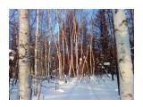 В березовом лесу... Фотограф: vikirin  Просмотров: 3355 Комментариев: 0