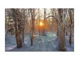 вечер в лесу  Просмотров: 1532 Комментариев: 3