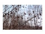 Весна... Фотограф: vikirin  Просмотров: 2336 Комментариев: 0