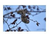 Чечетки Фотограф: Tsygankov Yuriy  Просмотров: 68 Комментариев: 0