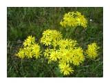 Цветок лета! Фотограф: viktorb  Просмотров: 591 Комментариев: 0