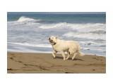 Название: У моря Фотоальбом: собаки Категория: Животные  Время съемки/редактирования: 2020:11:10 09:42:23 Фотокамера: Canon - Canon EOS 1200D Диафрагма: f/5.6 Выдержка: 1/1600 Фокусное расстояние: 135/1    Просмотров: 114 Комментариев: 0