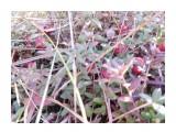 Название: клюка на Лебяжке Фотоальбом: Разное Категория: Природа  Время съемки/редактирования: 2018:09:29 17:28:11 Фотокамера: NIKON - COOLPIX S7000 Диафрагма: f/3.4 Выдержка: 10/300 Фокусное расстояние: 45/10    Просмотров: 55 Комментариев: 0