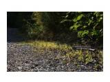 Название: На косе каменистой... Фотоальбом: 2012 Брусника на Чамге Категория: Природа Фотограф: vikirin  Время съемки/редактирования: 2012:09:20 01:11:26 Фотокамера: Canon - Canon EOS Kiss X3 Диафрагма: f/10.0 Выдержка: 1/200 Фокусное расстояние: 41/1    Просмотров: 1787 Комментариев: 0