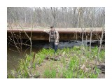 Мост через реку Осиновку! Фотограф: viktorb  Просмотров: 838 Комментариев: 0