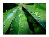 Название: Утрянняя свежесть Фотоальбом: Зарница Категория: Цветы Фотограф: Petrovitch  Время съемки/редактирования: 2008:06:30 17:34:10 Фотокамера: FUJIFILM - FinePix F40fd   Диафрагма: f/8.0 Выдержка: 10/600 Фокусное расстояние: 800/100 Светочуствительность: 200   Просмотров: 769 Комментариев: 2