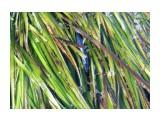 Японский анчоус На море, в траве куча этой рыбки.  Просмотров: 188 Комментариев: 0