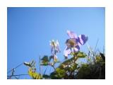 Название: К свету... Фотоальбом: Природа Категория: Цветы Фотограф: uchilca  Просмотров: 860 Комментариев: 0
