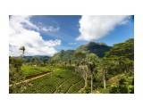 Название: Чайные плантации Фотоальбом: Шри-Ланка Категория: Туризм, путешествия  Просмотров: 380 Комментариев: 0