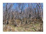 Лес на горе Фотограф: vikirin  Просмотров: 3831 Комментариев: 0