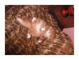 DSC04960 Фотограф: рмушник Сонный котяра!  Просмотров: 2026 Комментариев: 1