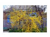 Весна Кубани Фотограф: gadzila  Просмотров: 914 Комментариев: 3