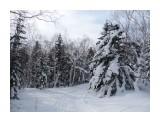 Зимний лес, зимний сон! Фотограф: viktorb  Просмотров: 951 Комментариев: 0