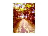 осень прогулки по парку Фотограф: фотохроник  Просмотров: 260 Комментариев: 0