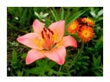 Название: P7020196_н Фотоальбом: Цветы, деревья и травы Категория: Цветы  Время съемки/редактирования: 2021:07:02 16:43:29 Фотокамера: OLYMPUS IMAGING CORP.   - FE250/X800              Диафрагма: f/2.8 Выдержка: 10/4000 Фокусное расстояние: 74/10    Просмотров: 50 Комментариев: 0