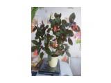 Название: фуксия Фотоальбом: Мои цветочки Категория: Разное Описание: фуксия  Просмотров: 520 Комментариев: 0