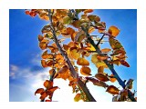 деревья Фотограф: alexei1903  Просмотров: 1338 Комментариев: 0