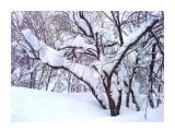 В снегу.. Фотограф: vikirin  Просмотров: 2382 Комментариев: 0