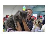 Название: Выставка Фотоальбом: выставка кошек Категория: Животные  Время съемки/редактирования: 2015:10:18 09:07:56 Фотокамера: Canon - Canon EOS 550D Диафрагма: f/4.0 Выдержка: 1/250 Фокусное расстояние: 24/1    Просмотров: 415 Комментариев: 0