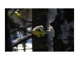 Название: В лесном сумраке.. Фотоальбом: ЗИМА .. уже перед самым мартом.. Категория: Природа Фотограф: vikirin  Просмотров: 1286 Комментариев: 0