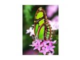 Название: Без кокона, а значит без ограничений, лишений и терпения, крыльям у гусенички не вырасти... Фотоальбом: Мотивация Категория: Макросъёмка  Просмотров: 72 Комментариев: 0