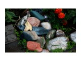Каменюки с моря улеглись на клумбе.... Фотограф: vikirin  Просмотров: 1828 Комментариев: 0