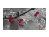 Красная смородина лесная.  Просмотров: 220 Комментариев: 0