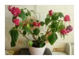 Название: Бальзамин Фотоальбом: Мои цветочки Категория: Разное Описание: Бальзамин  Просмотров: 643 Комментариев: 0