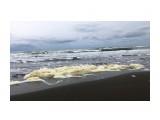 Название: Морская пена Фотоальбом: Природа 2020г Категория: Природа  Просмотров: 514 Комментариев: 0