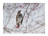 Название: DSC09201_н Фотоальбом: Птицы Категория: Животные  Время съемки/редактирования: 2017:02:14 13:07:20 Фотокамера: SONY - DSC-HX300 Диафрагма: f/6.3 Выдержка: 1/250 Фокусное расстояние: 21500/100    Просмотров: 34 Комментариев: 2