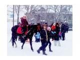 Бодрые лошадки отмеряли свои квадраты.. Фотограф: vikirin  Просмотров: 2446 Комментариев: 0