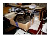 Спим на рабочем месте!!!!!Драный почтовый кот !!! Фотограф: vikirin  Просмотров: 5898 Комментариев: 0