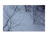 IMG_6599 Фотограф: vikirin  Просмотров: 772 Комментариев: 0