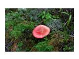 IMG_9288 Фотограф: vikirin  Просмотров: 726 Комментариев: 0