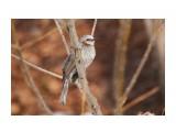 Название: _DSC4433 Фотоальбом: Птички Категория: Животные Фотограф: VictorV  Время съемки/редактирования: 2020:04:02 21:26:14 Фотокамера: SONY - DSLR-A900 Диафрагма: f/6.3 Выдержка: 1/1000 Фокусное расстояние: 6000/10    Просмотров: 9 Комментариев: 0
