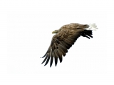 охотник Фотограф: ©  marka /печать больших фотографий,создание слайд-шоу на DVD/  Просмотров: 752 Комментариев: 1