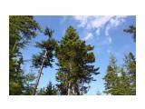 Сахалинская тайга..  Фотограф: vikirin  Просмотров: 1633 Комментариев: 0